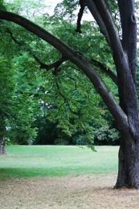 natascha-herrngarten-11