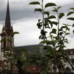 natascha-herrngarten-5